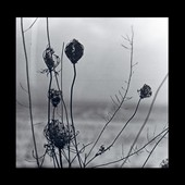 Recondite: Placid *